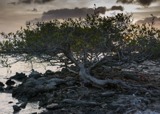 Lonely Tree, Tree next to Ocean, Tree on rocks, Grey Tree, Tree at sunset