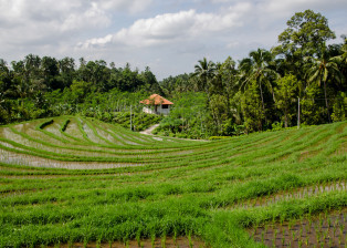 Farm, Field, Greenfield, Lone house in Field, Tropical Field