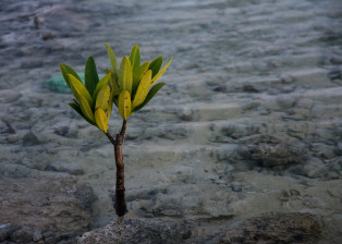 Lone Plant, Young Tree, Seedling, Tree in dirt, Seedling in dirt
