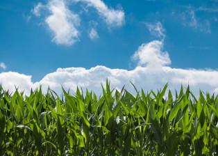 Plants, Green Plants, Blue Sky, Clouds, Vegetation