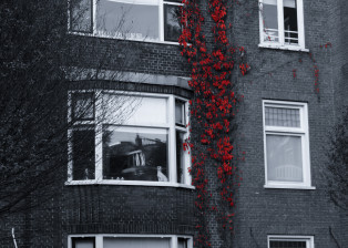 climbing plants, wall plants, plants, botany, trees, branches, building, architecture, windows, window frames