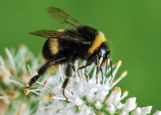 flower, flowers, petals, botany, bee, insect, animal, pollination, plant, plants