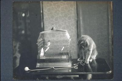 canary bird, parrot, cage, bird, cat, feline, pets, animal, animals, photo, picture, image