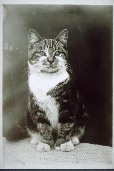 cat, history, old, vintage, paws, feline, animal, pet, photo, picture, image, photography