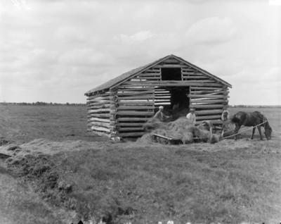 hay, farm, farming, land, agriculture, pasture, mower, horse, drawn mower, grass, shack, history