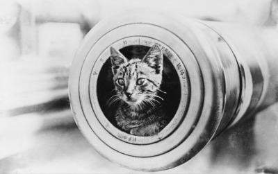 cannon, kitten, cat, feline, animal, vintage, fur, whiskers