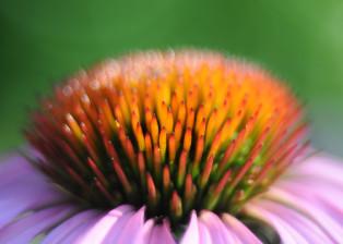 flower, petals, stems, plant, plants, grass, botany