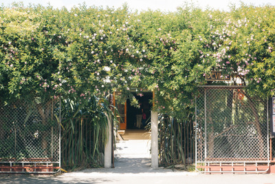 building, structure, entrance, climbing plants, flowers, fence, botany, sky