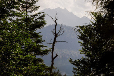 bavaria, forest, woodland, wood, altitude, hills, sky, clouds, branches, trees, vegetation, geography