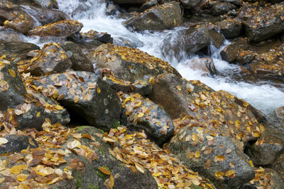 spring, stream, water, rocks, stones, leaves, moss, leafage, foliage, nature, fall, autumn