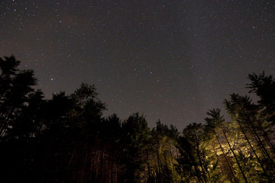 sky, stars, night, astronomy, universe, space, galaxy, wood, forest, trees, treetops, branches
