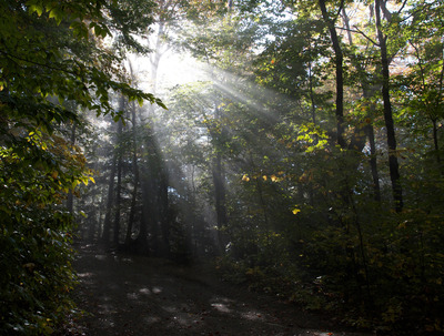 wood, forest, trail, sun rays, sun, trees, branches, leaves, bark, treetops