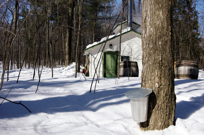 winter, snow, season, house, home, architecture, wood, forest, snow cover, trees, bark, branches