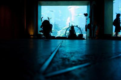 aquarium, underground, tanks, fishes, tourists, visitors, water