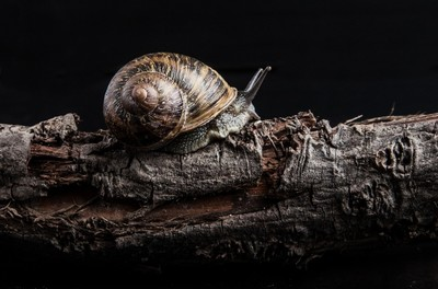 snail, animal, texture, antennae, mollusc, zoology, shell, bark, wood