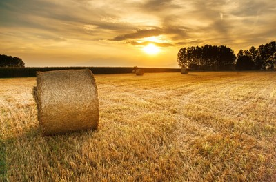 field, rural, countryside, hay, trees, nature, sky, clouds, sun, sunlight, landscape, land