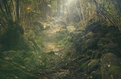 wood, forest, path, trail, moss, rocks, trees, branches, sunlight, sun rays, nature, vegetation