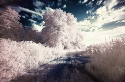 infrared, landscape, light, white, sky, clouds, motion, nature, trees, branches, vegetation