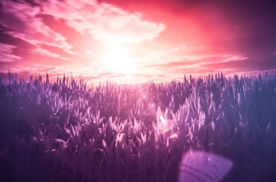 colorful, infrared, nature, field, landscape, light, pink, sun, sun rays, clouds, sky, morning, sunrise