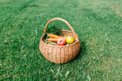 vegetables, fruits, food, basket, grass, carrots, healthy, parsley
