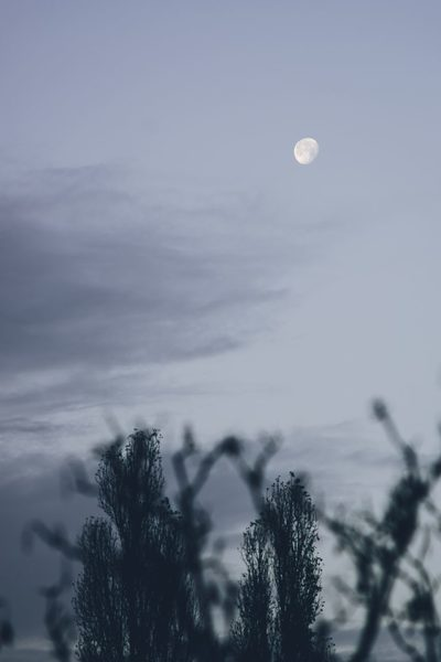 sky, clouds, moon, cold, weather, nature, trees