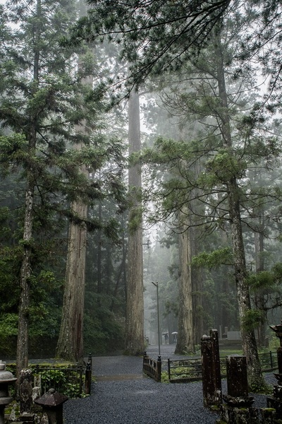 park, nature, trees, branches, fog, walkway, mist, forest, wood, bark