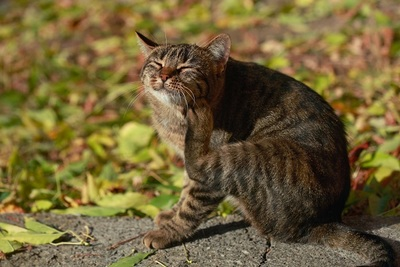 cat, feline, animal, pet, whiskers, outdoors, bokeh