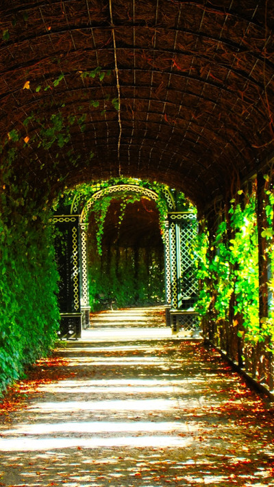 vine, walkway, vines, greenery, passage, leaves, nature, park, garden, sunlight