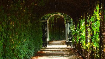 vine, walkway, vines, greenery, passage, leaves, nature, park, garden