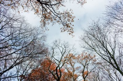 trees, branches, nature, forest, wood, winter, treetops, sky, season, park