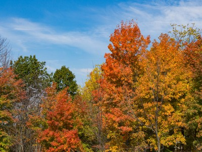tree, trees, forest, wood, branches, autumn, fall, season, sky, nature, treetops