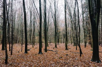 forest, wood, trees, branches, nature, autumn, fall, foliage, leaves, bark