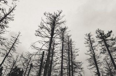 trees, forest, wood, branches, nature, sky, winter, season, cold