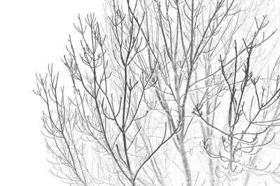 trees, branches, nature, treetops, sky, wood, forest, fog, winter, season, cold