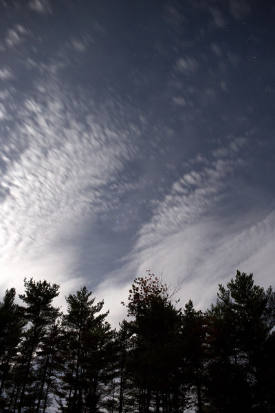trees, branches, nature, treetops, sky, clouds, forest, wood