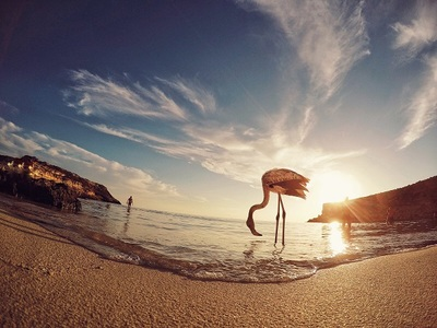 ocean, sea, water, beach, sand, bird, animal, beak, sunlight, sky, clouds