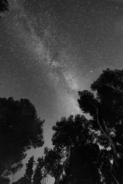 sky, night, stars, starry, astronomy, forest, trees, black, white, milky, way