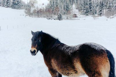 winter, snow, season, cold, nature, horse, animal, trees, wildness