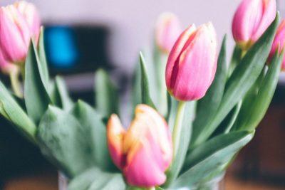 flowers, petals, flora, plants, botany, blossom, pink, roses, bokeh