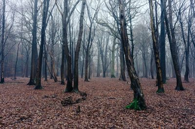 forest, wood, trees, branches, nature, foliage, leaves, autumn, fall, season, mist, fog