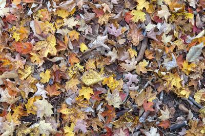 leaves, leaf, season, nature, foliage, leafage, wood, yellow, brown, autumn, fall