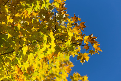 trees, branches, nature, sky, leaves, season, spring, treetops, bokeh, cloudless