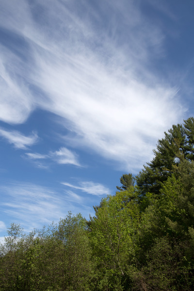 forest, wood, trees, branches, greenery, nature, sky, clouds, treetops, forestry, spring
