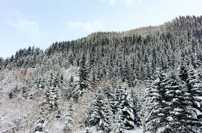 forest, wood, trees, hills, pines, season, winter, nature, forestry, branches, sky