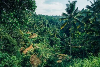forest, destination, bali, palm, trees, nature, landscape, green, greenery, branches