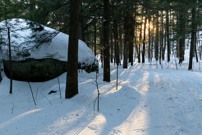 winter, snow, cold, season, nature, forest, wood, trees, sunlight, branches