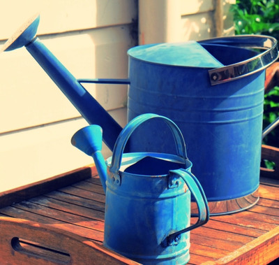 watering, cans, blue, garden, gardening, sunlight, plants