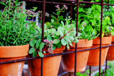 herbs, pots, plants, garden, nature, gardening, growing, flowers