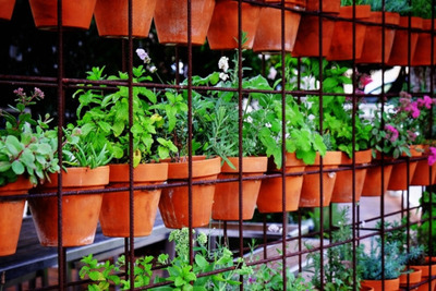 herbs, pots, plants, garden, nature, gardening, growing