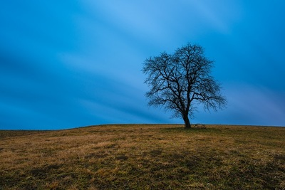tree, branches, nature, landscape, grass, dusk, treetop, meadow